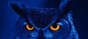 Night Owl Image
