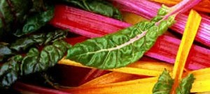 swiss_chard_350x350-300x300
